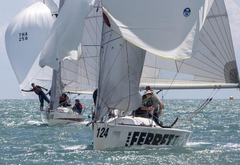 Top of the Gulf Regatta 2019. The Ferret. - photo © Guy Nowell / Top of the Gulf Regatta