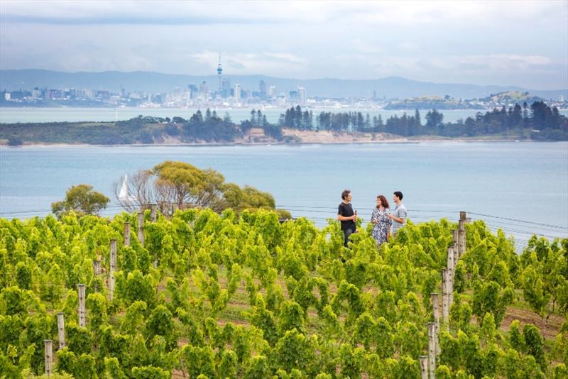 Auckland City as seen from a vineyard on Waiheke Island - photo © Tourism New Zealand / Miles Holden