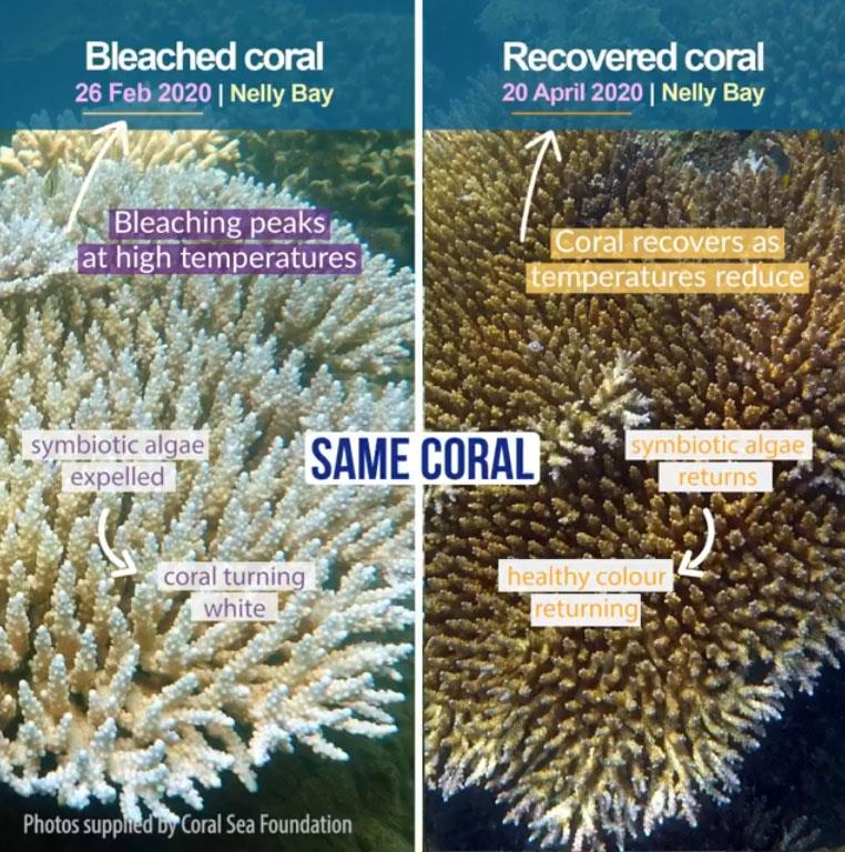 Reef health updates photo copyright Coral Sea Foundation taken at
